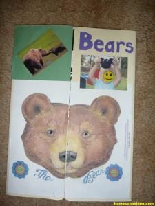 Bear Lapbook PreK