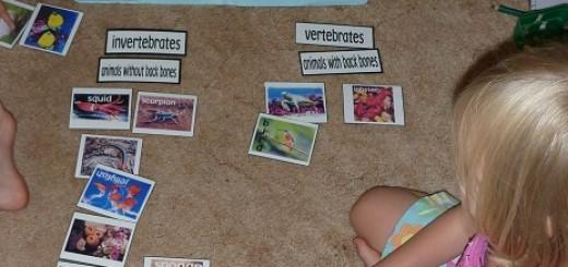 Vertebrate-Invertebrate-Card-Sort