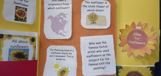 Sunflower-lapbook