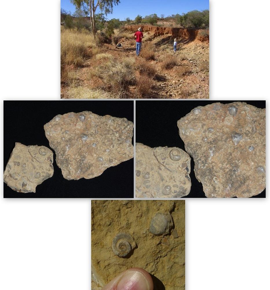 Australian-fossils