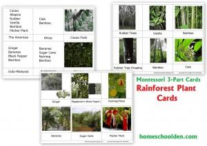 Rainforest Plant-Cards-Montessori-3-Part-
