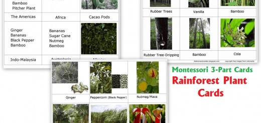 Rain Forest Plant Cards - Free Montessori 3-part Cards