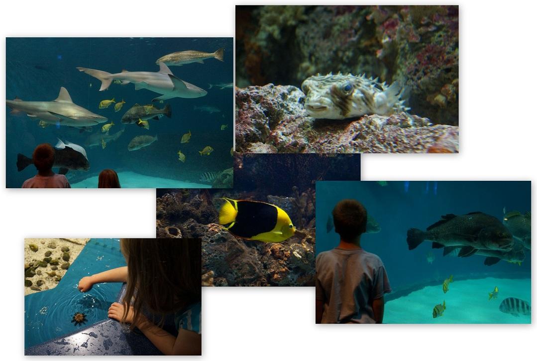 NC-Aquarium