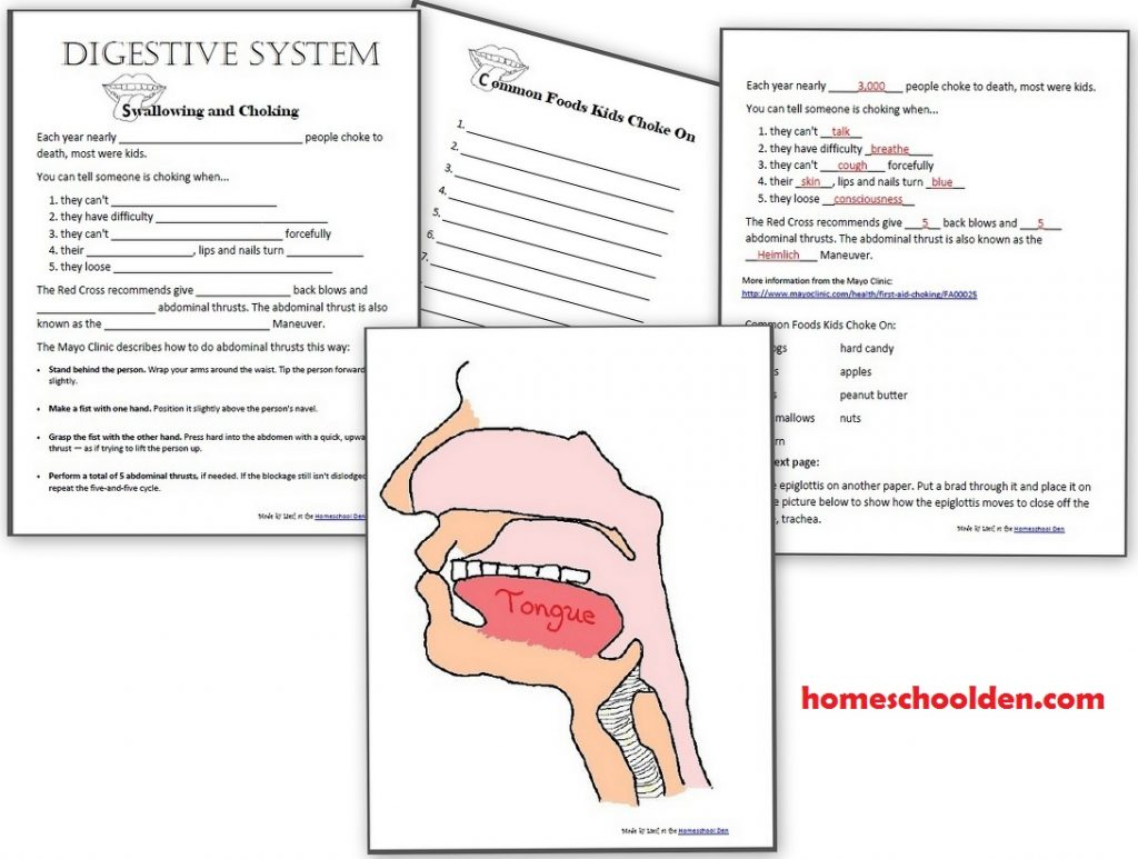 Workbooks high school art worksheets : Digestive System Worksheets – 40+page Packet - Homeschool Den