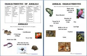 AnimalCharacteristics