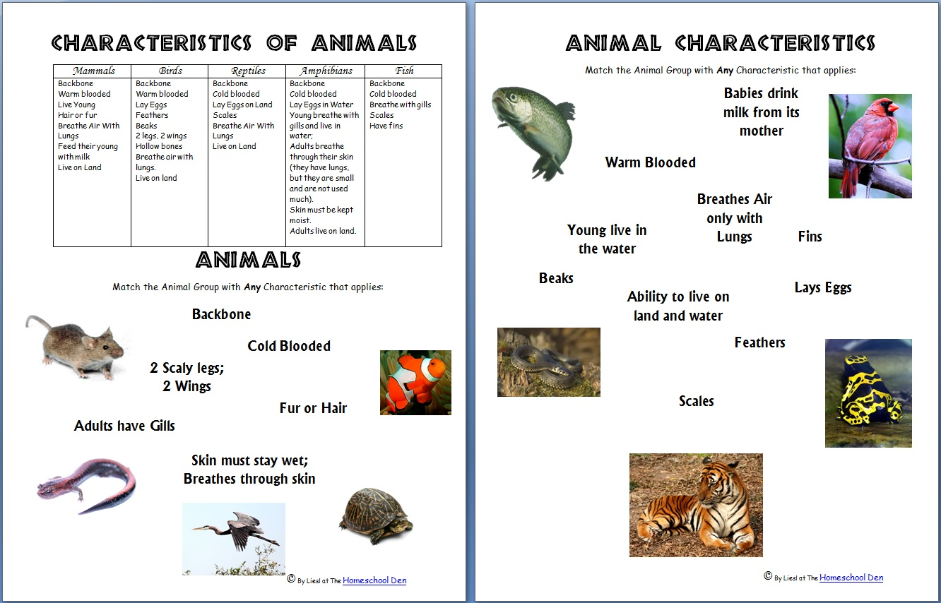 animals and their characteristics free worksheet homeschool den. Black Bedroom Furniture Sets. Home Design Ideas