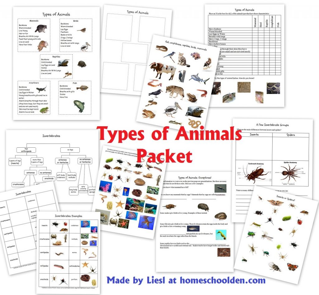 Workbooks types of government worksheets printable : Animals and Their Characteristics (Free Worksheet) - Homeschool Den