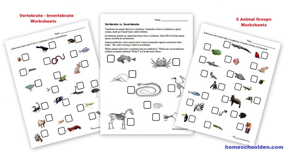 Vertebrate - Invertebrate Worksheets