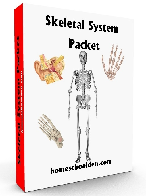 Human Body Systems Worksheets Homeschool Den – Human Body Systems Worksheets