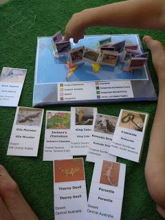 Reptile CardsP1030015