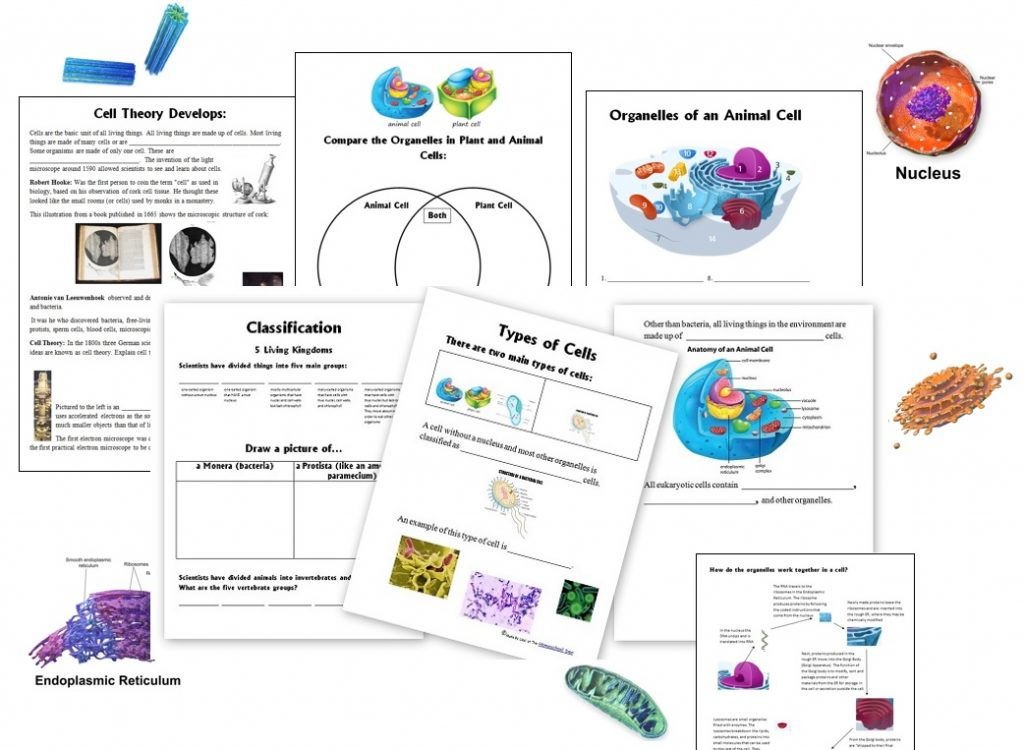 Cell Unit Organelles And Their Function Animal Vs Plant Prokaryotic Cells Diagram Below Learn About Worksheets