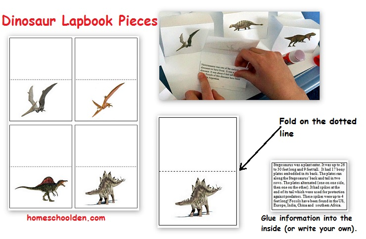 Dinosaur Lapbook
