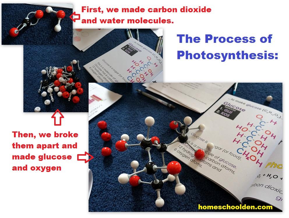 Photosynthesis Worksheets - Homeschool Den