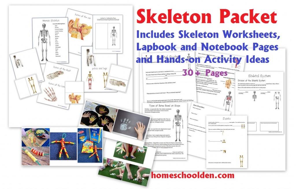 Human Body Systems Worksheets Homeschool Den – Body Systems Worksheets
