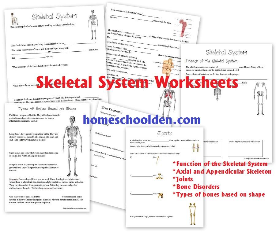 skeletal system coloring book answers murderthestout. Black Bedroom Furniture Sets. Home Design Ideas