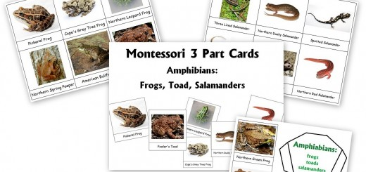 Montessori 3-Part Cards Amphibians