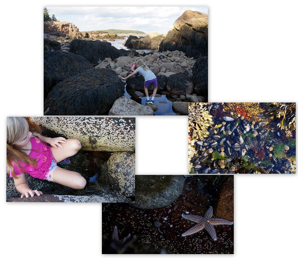 Acadia-National-Park-Maine-tidal-pools