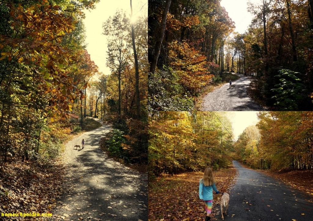 Morning-Walks-Fall