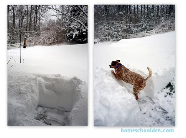 Snow-Jan2016-Front