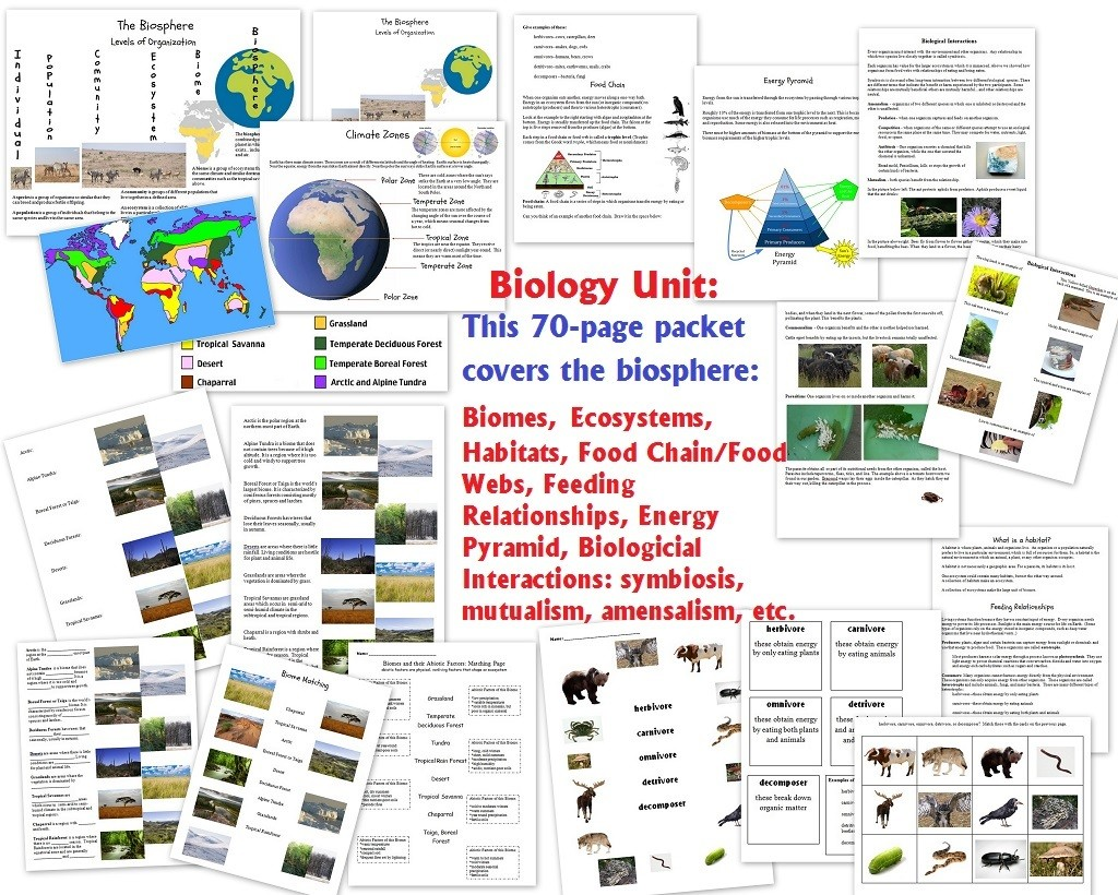 Workbooks worksheets on biomes : Biology Unit on the Biosphere: biomes, ecosystems, habitats ...
