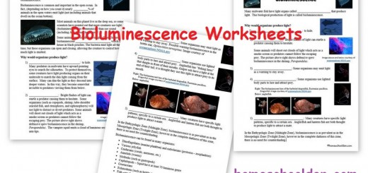 Bioluminescence-Worksheets