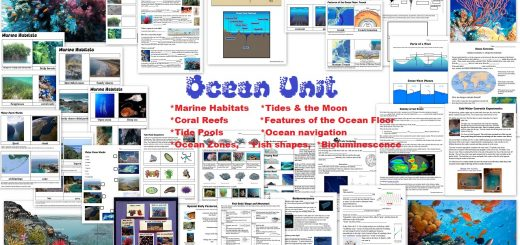 Ocean Unit - Marine Habitats Coral Reefs Tide Pools Tides Currents Ocean Zones Bioluminescence Worksheets and more