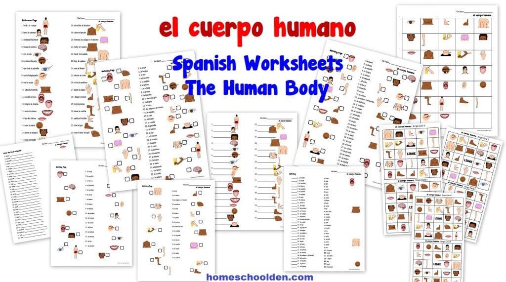 Spanish Worksheets - el cuerpo humano The Human Body