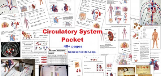 Circulatory System Worksheets and Activities
