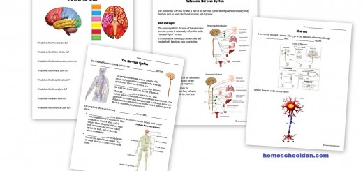 Human Body Worksheets: Cells, Tissues, Organs, and the Human Body ...