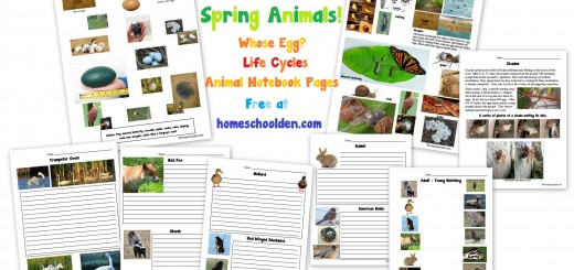 Spring Animals - Whose Egg? - Life Cycles