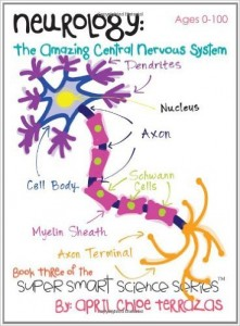 Nervous System Worksheets Homeschool Den