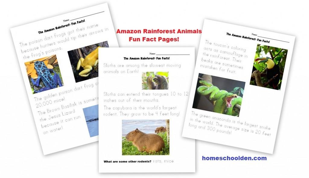 Amazon Rainforest Animal Worksheets