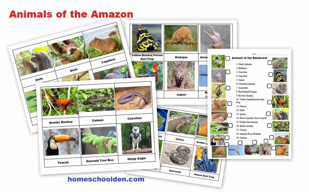 Rainforest Animals Montessori 3-Part Cards