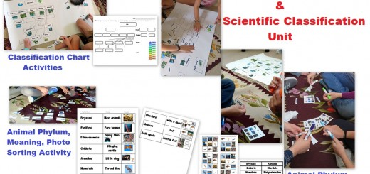 Taxonomy-Scientific Classification-Activities
