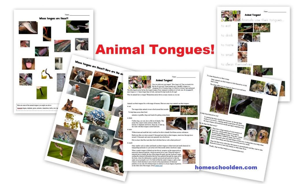 Animal -Tongues
