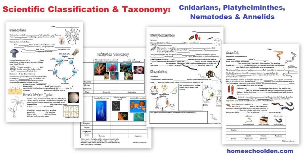 Scientific Classification - Taxonomy