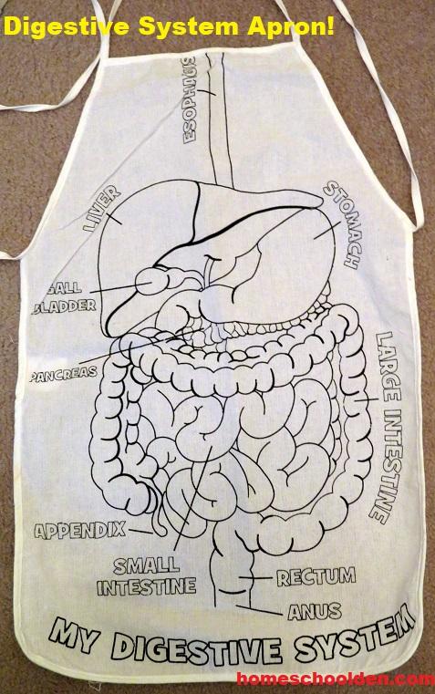Digestive Sysetm Unit - Apron