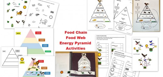 Food Chain Food Web Food Pyramid Activties - Interactive Notebook Pages