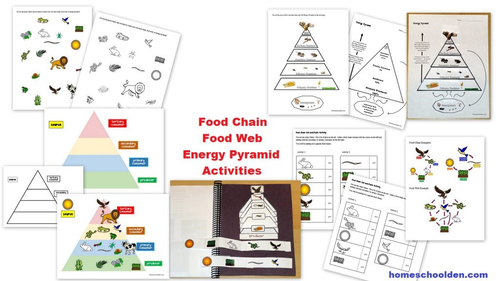 Biology Pages Food Chains