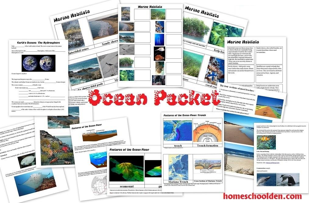 Ocean worksheets marine habitats ocean features and more