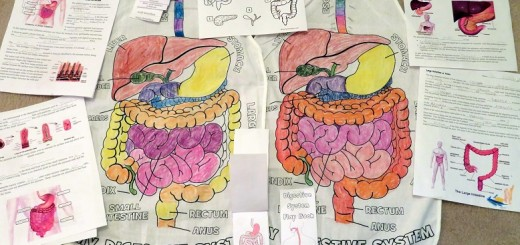 Digestive-System Activities