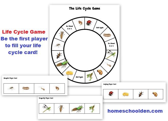 Life Cycle Game