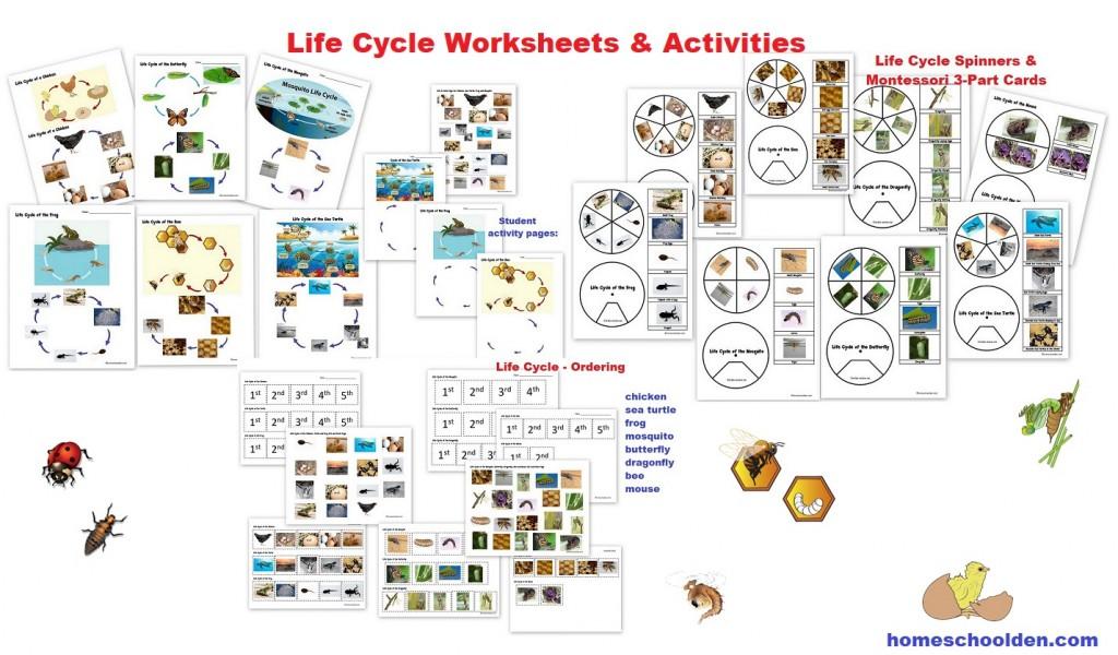 Animals and Their Characteristics (Free Worksheet) - Homeschool Den
