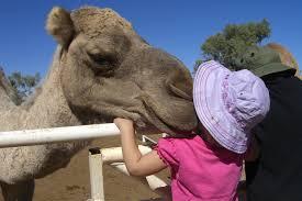 Camel Farm 1