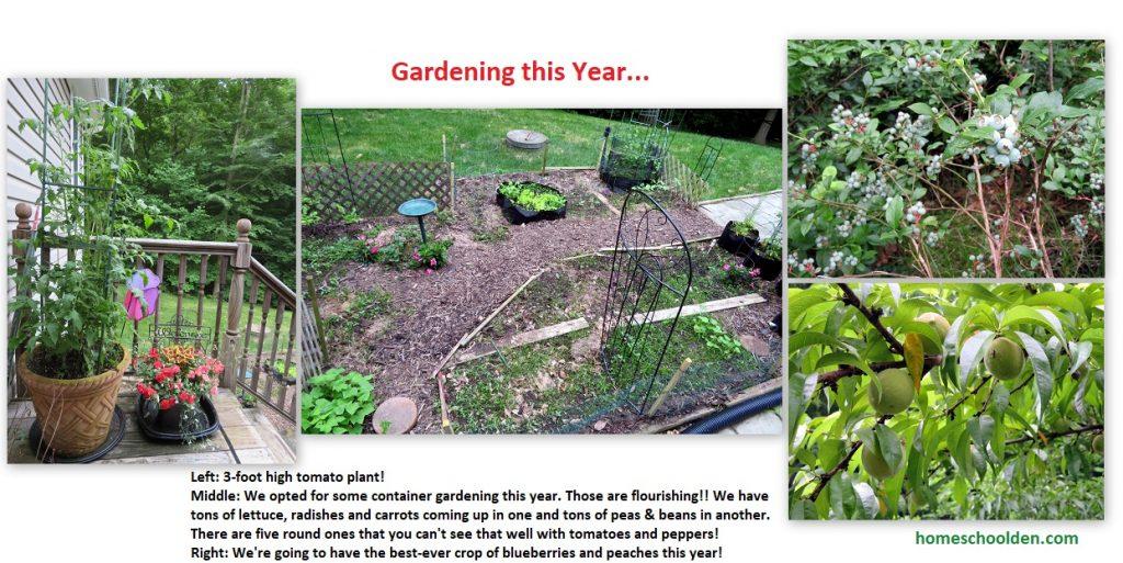 Gardening this year