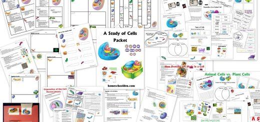 Cell Packet - Cell Unit Homeschool Curriculum