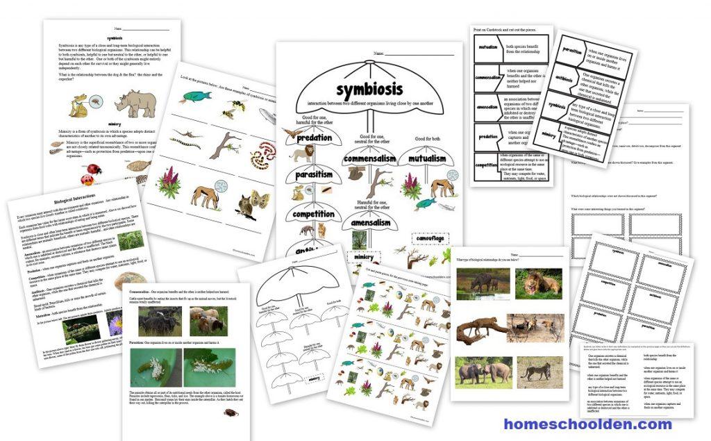 Symbiosis Commensalism Mutualism Parasitism Mimicry Biology