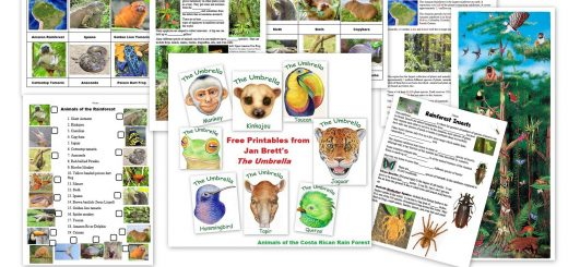 Rainforest Printables and Resources