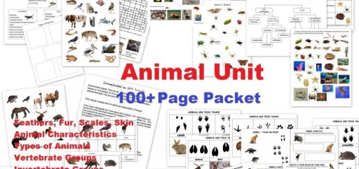 Animal-Unit-100-pages-worksheets-feathers-fur-scales-skin-vertebrates-invertebrates-insects-spiders