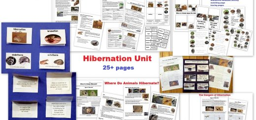 Hibernation Unit for Kids